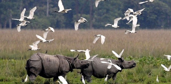kaziranga-national-park2