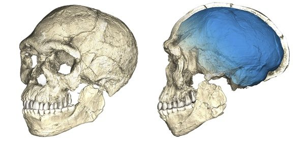 Indian History Narmada woman skull