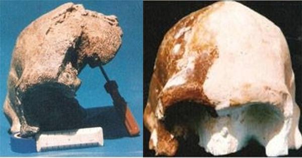 False Africa theory and Narmada Nensis